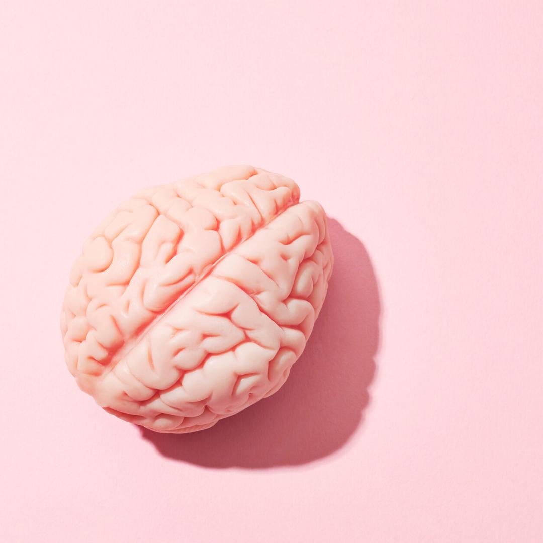 Cervello rosa di plastica